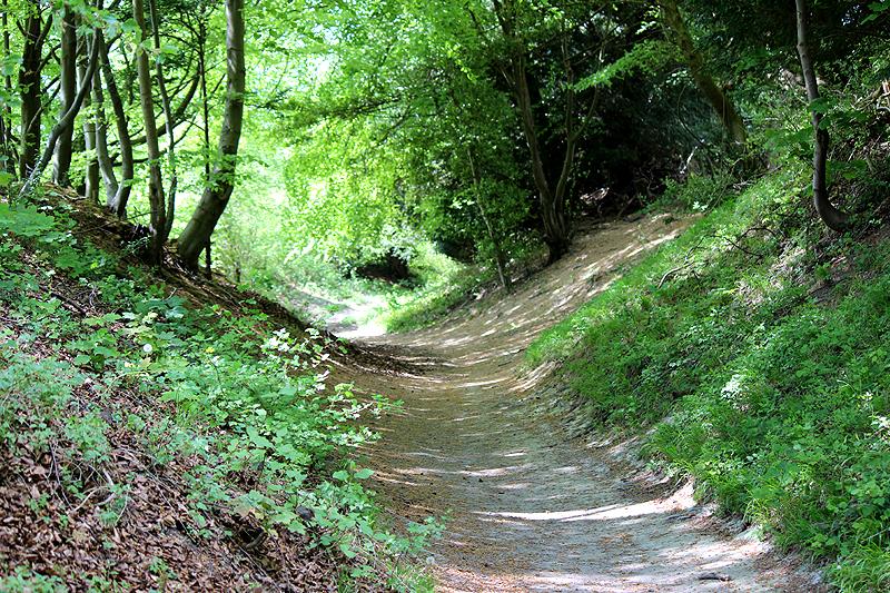 Sunken Lane in the Chilterns