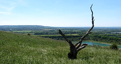View from Ivinghoe towards Wendover Woods
