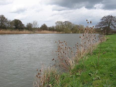 The Ridgeway at South Stoke