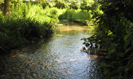 The River Chess is a Beautiful Chilterns Chalk Stream