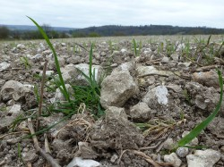 Chilterns Weathered Field Flint